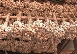 โครงการช่วยเหลือเกษตรกรผู้ปลูกกระเทียม จังหวัดเชียงใหม่ ปีการผลิต 2558/59